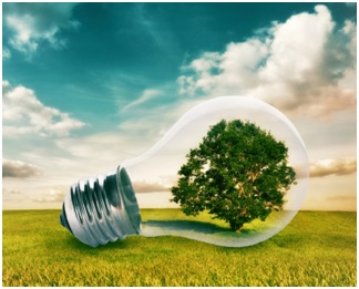 Growing A More Green And Sustainable Business