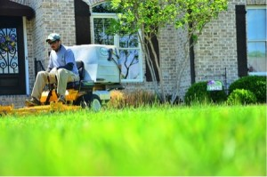 lawn care grass